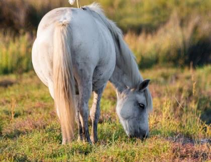 cheval marais Nature Médoc Atlantique