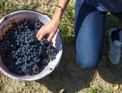Route des vins Médoc vendanges