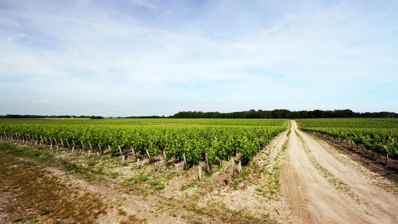 Vignoble Queyrac