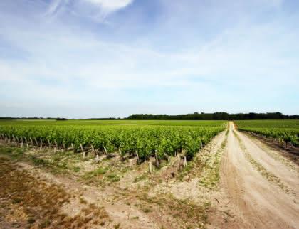 Vignes - © Djé - 1 moment 1 image (1)