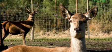 Animalia Parc - La Ferme