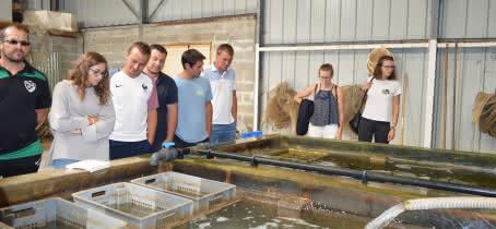 Visite du producteur à l'assiette - Affinage des huîtres