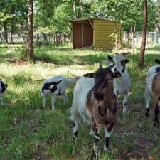 Animalia Parc (2)