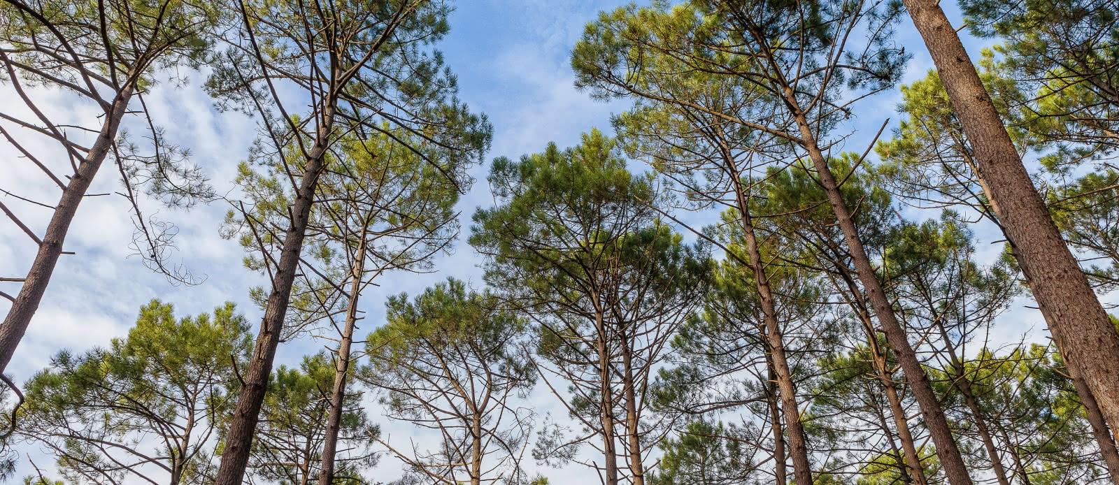Aire de camping-cars La Pinède, Montalivet4